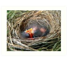 Baby Birds in Nest Art Print