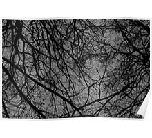 Skyward trees Poster