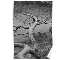 Stretching tree  Poster