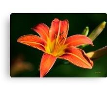 Orange Lily Flower Art Canvas Print