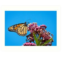 Meadow Monarch Butterfly Art Art Print