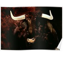 Bull head Poster