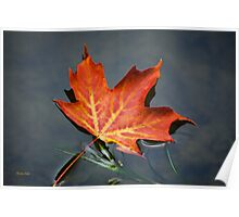 Red Maple Leaf Nature Art Poster