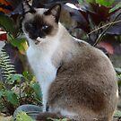 Cat In The Jungle - Gato En La Selva by Bernhard Matejka