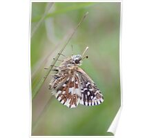 Grizzled Skipper Poster
