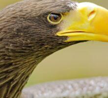 Steller's Sea Eagle (Haliaeetus pelagicus) Sticker