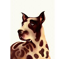 A Dog - Great dane Photographic Print