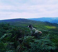 The Wandering Sheep  by J Bonanno