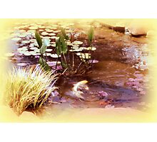 At Home Among the Lily Pads Photographic Print
