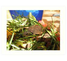 Box Turtle. Art Print