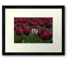 It Is Fun Being Different Framed Print