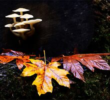 Mushrooms And Leaves by Bob Christopher