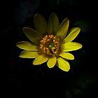 Fractal Yellow Neverland by Atılım GÜLŞEN