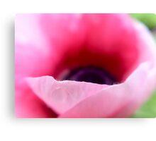 Wild Pink Poppy Canvas Print