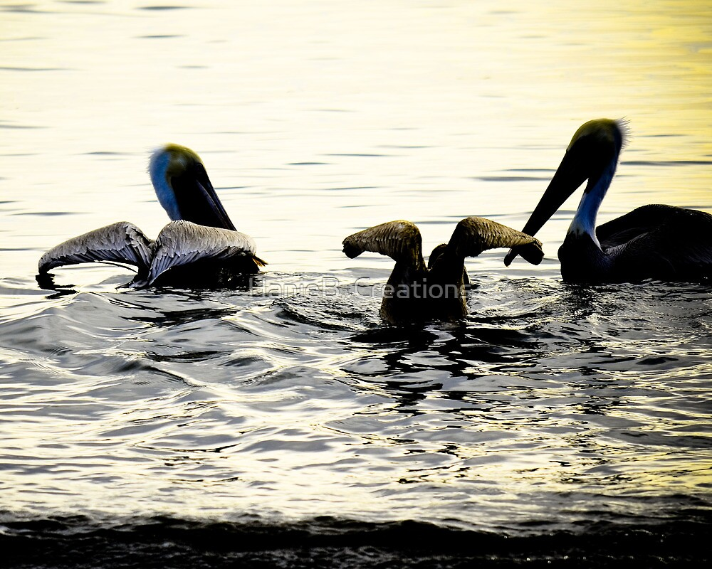 Pelican Swim by HanieBCreations