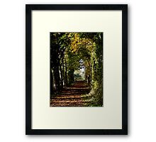 Autumn Avenue  Framed Print