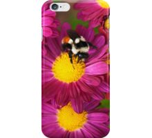 Red Tailed Bumble Bee iPhone Case/Skin