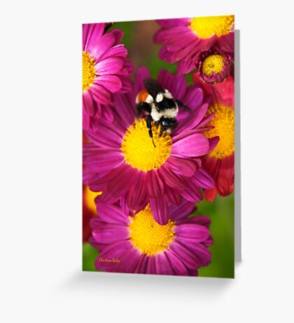 Red Tailed Bumble Bee Greeting Card