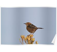 Golden-headed Cisticola Poster