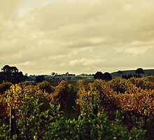 the vineyard by natalie angus