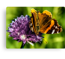 The Red Admiral Canvas Print