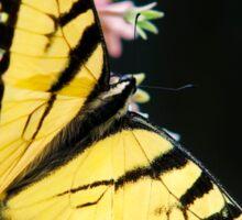 Swallowtail Butterfly on Flower Sticker