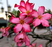Pagoda Flower by claireh