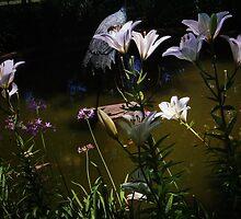 Middleton Plantation - Garden Delights by photosan