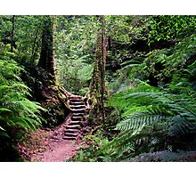 Welcome To My Forest Photographic Print
