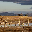 Mt Stapylton by Andrew Cowell