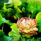 Lotus Inspiration by Margi