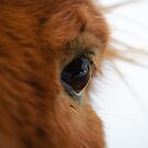 In your eyes by Ólafur Már Sigurðsson