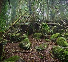 Tangled Vines, Springbrook National Park, QLD by burrster