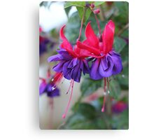 Fabulous Fuschias Canvas Print