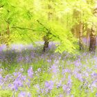 Bluebell wood by MartinMuir