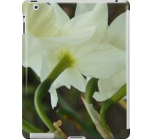 A collection of rising Daffodils iPad Case/Skin