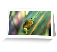 Gorgeous little frog Greeting Card