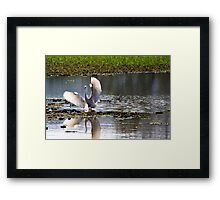 Spread my wings Framed Print