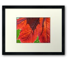 In your Shadow Framed Print