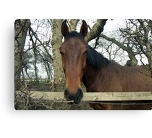 """Why the long Face"" Canvas Print"