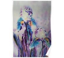 Irises on silk Poster