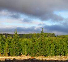 Santa's Forest in Summer by Ersu Yuceturk