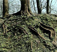 Roots by MKuntu