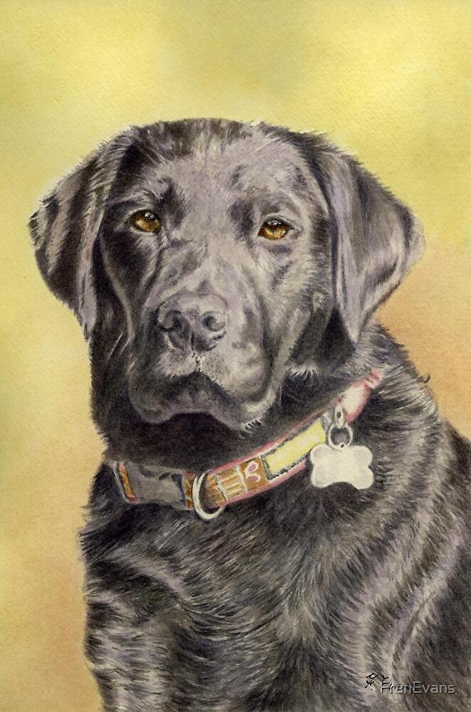 Black Labrador by FranEvans