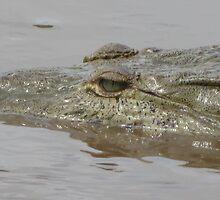 Crocodile in Rio Grande de Tarcoles, Costa Rica by LissMarie17