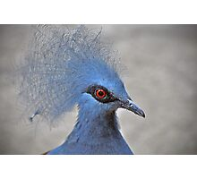 Crowned Pigeon Photographic Print