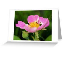 Texas Wild Rose Greeting Card
