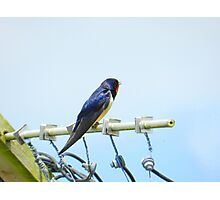 Bird on the wire! Photographic Print