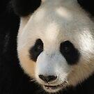 All Things Panda by v-something