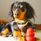 Luna and her KONG® by Alyssa Kochis